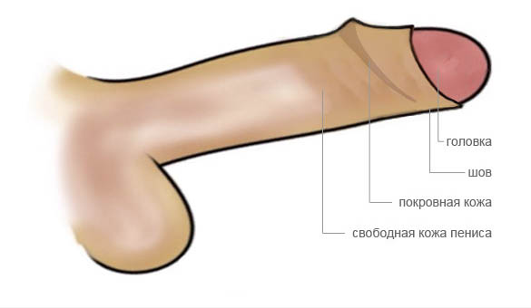 Обрезание крайней плоти у мужчин: фото до и после операции ...